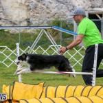 Dog Agility Trials Bermuda, March 28 2015-37