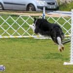 Dog Agility Trials Bermuda, March 28 2015-38