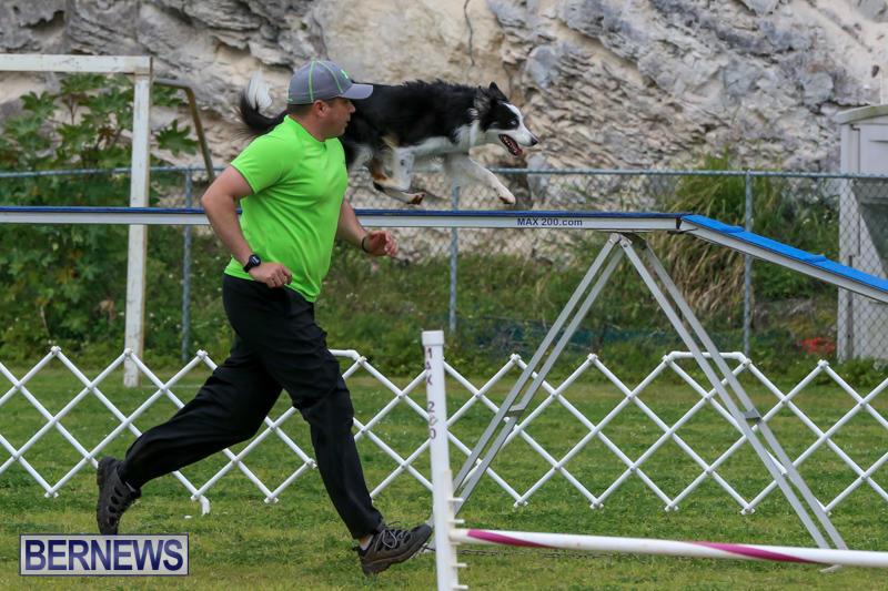 Dog-Agility-Trials-Bermuda-March-28-2015-39