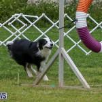 Dog Agility Trials Bermuda, March 28 2015-40