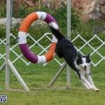 Dog Agility Trials Bermuda, March 28 2015-41