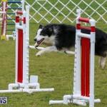 Dog Agility Trials Bermuda, March 28 2015-44