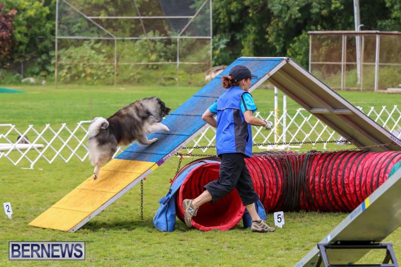 Dog-Agility-Trials-Bermuda-March-28-2015-46
