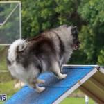 Dog Agility Trials Bermuda, March 28 2015-47