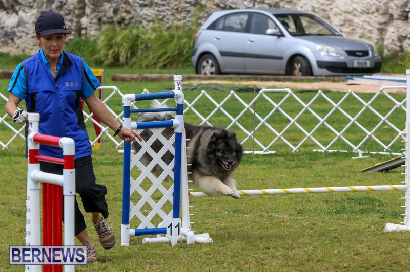 Dog-Agility-Trials-Bermuda-March-28-2015-48