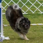 Dog Agility Trials Bermuda, March 28 2015-49