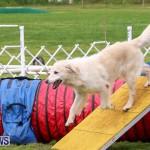 Dog Agility Trials Bermuda, March 28 2015-5