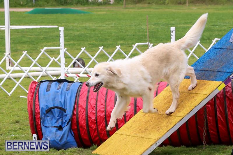 Dog-Agility-Trials-Bermuda-March-28-2015-5