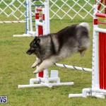 Dog Agility Trials Bermuda, March 28 2015-51