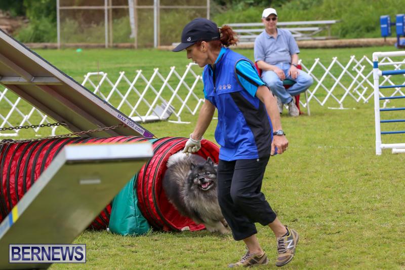 Dog-Agility-Trials-Bermuda-March-28-2015-52