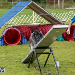 Dog Agility Trials Bermuda, March 28 2015-53