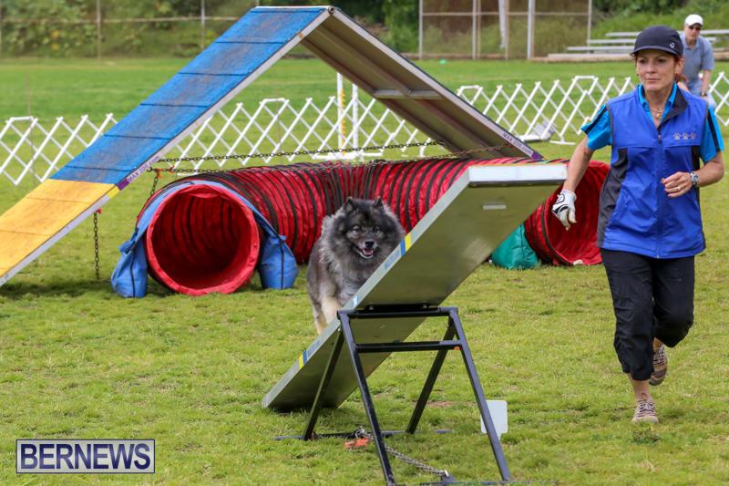 Dog-Agility-Trials-Bermuda-March-28-2015-53