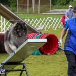 Dog Agility Trials Bermuda, March 28 2015-54