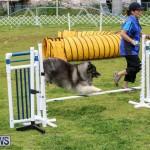 Dog Agility Trials Bermuda, March 28 2015-56