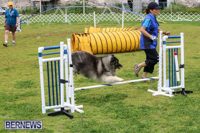 Dog-Agility-Trials-Bermuda-March-28-2015-56