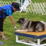 Dog Agility Trials Bermuda, March 28 2015-59
