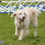 Dog Agility Trials Bermuda, March 28 2015-6