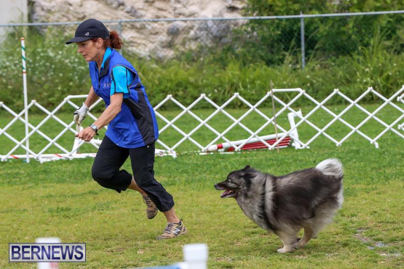 Dog-Agility-Trials-Bermuda-March-28-2015-60
