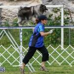 Dog Agility Trials Bermuda, March 28 2015-61