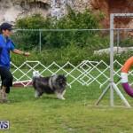 Dog Agility Trials Bermuda, March 28 2015-62