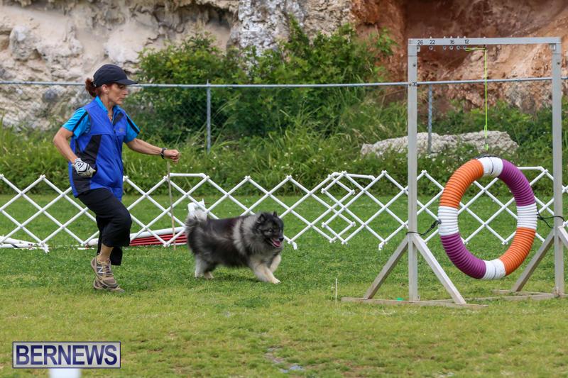 Dog-Agility-Trials-Bermuda-March-28-2015-62