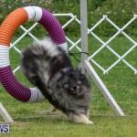 Dog Agility Trials Bermuda, March 28 2015-63