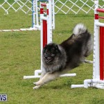 Dog Agility Trials Bermuda, March 28 2015-64