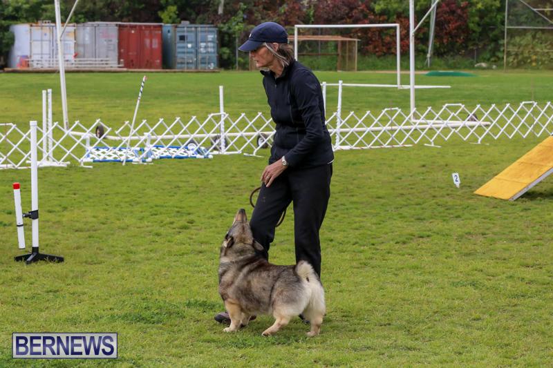 Dog-Agility-Trials-Bermuda-March-28-2015-67