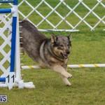 Dog Agility Trials Bermuda, March 28 2015-69