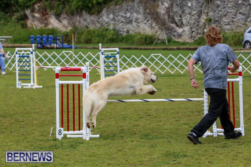 Dog-Agility-Trials-Bermuda-March-28-2015-7