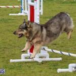 Dog Agility Trials Bermuda, March 28 2015-72