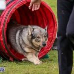 Dog Agility Trials Bermuda, March 28 2015-73