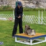 Dog Agility Trials Bermuda, March 28 2015-78
