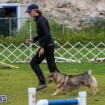 Dog Agility Trials Bermuda, March 28 2015-79