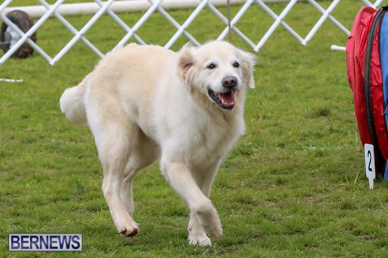 Dog-Agility-Trials-Bermuda-March-28-2015-8