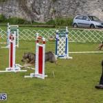 Dog Agility Trials Bermuda, March 28 2015-83