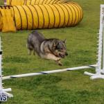 Dog Agility Trials Bermuda, March 28 2015-85