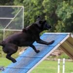 Dog Agility Trials Bermuda, March 28 2015-86