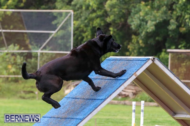 Dog-Agility-Trials-Bermuda-March-28-2015-86