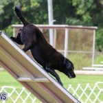 Dog Agility Trials Bermuda, March 28 2015-87