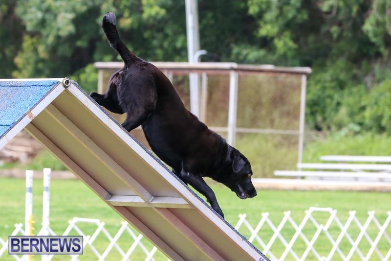 Dog-Agility-Trials-Bermuda-March-28-2015-87