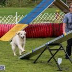 Dog Agility Trials Bermuda, March 28 2015-9
