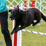Dog Agility Trials Bermuda, March 28 2015-91
