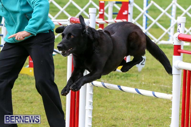 Dog-Agility-Trials-Bermuda-March-28-2015-91