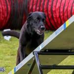 Dog Agility Trials Bermuda, March 28 2015-92