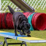 Dog Agility Trials Bermuda, March 28 2015-93
