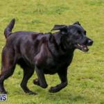 Dog Agility Trials Bermuda, March 28 2015-95