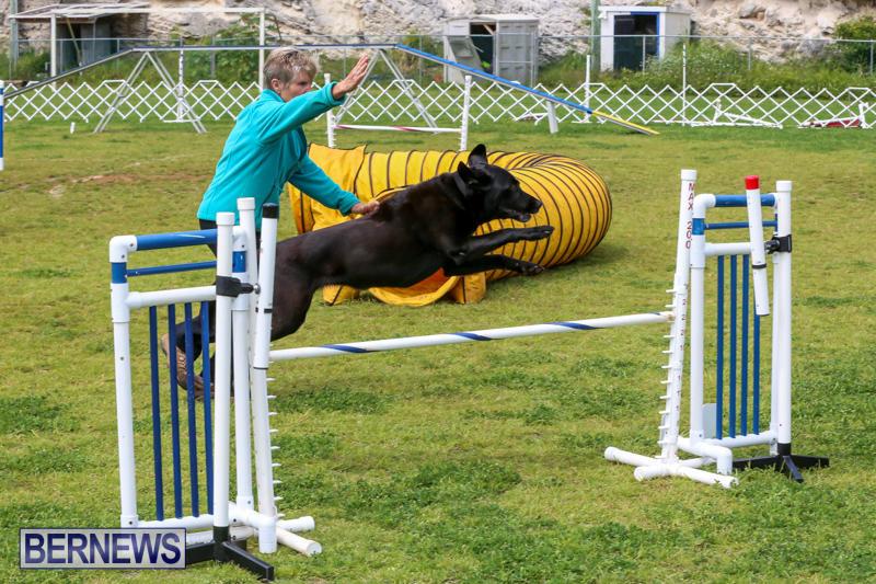 Dog-Agility-Trials-Bermuda-March-28-2015-96