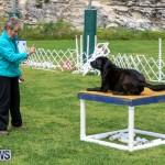 Dog Agility Trials Bermuda, March 28 2015-98