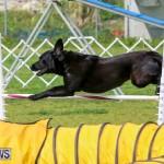 Dog Agility Trials Bermuda, March 28 2015-99